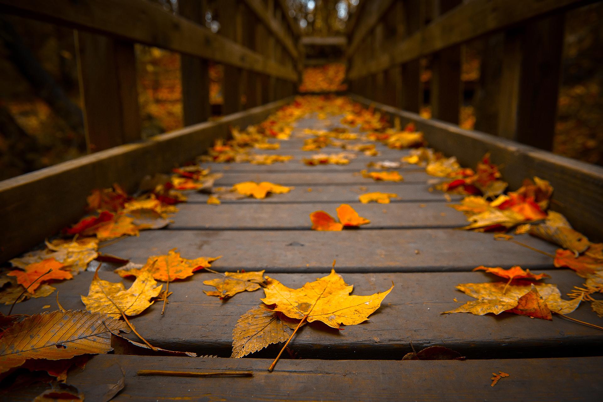 autumn bridge wallpaper