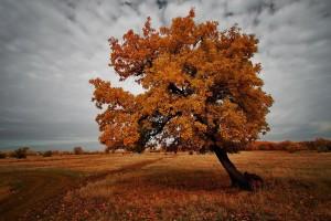 autumn brown landscape