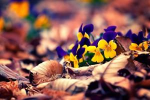 autumn flowers hd