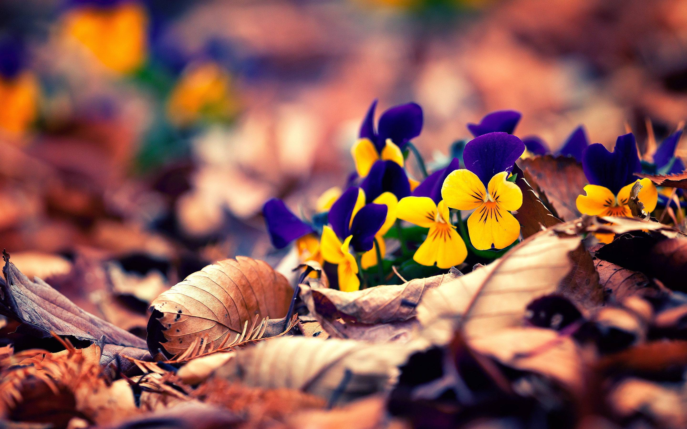 autumn flowers hd