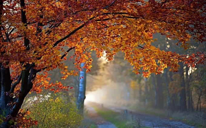 autumn foliage road