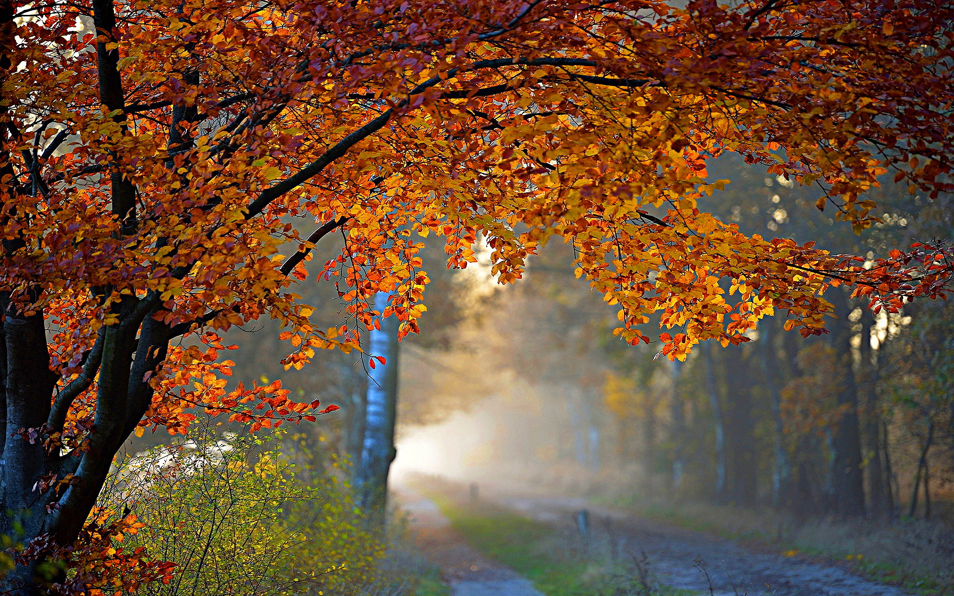 autumn foliage road