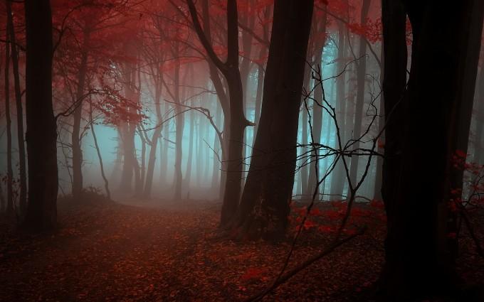 autumn forest mystic