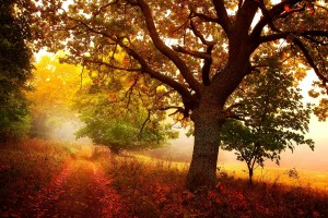 autumn forest trees hd