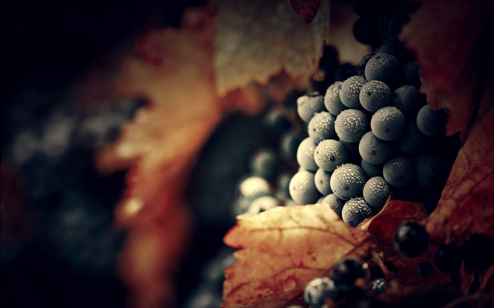 autumn grapes wallpaper