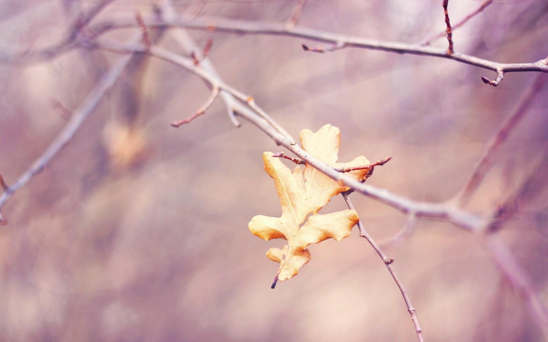 autumn hd leaf