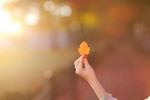 autumn images desktop hd