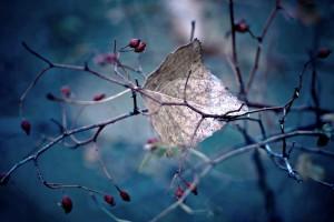 autumn images hd