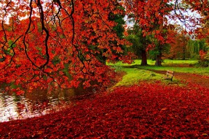 autumn images red