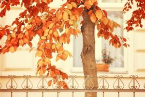 autumn images tree