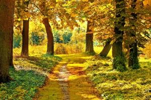 autumn landscape images