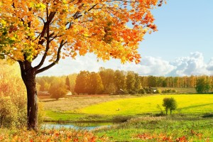 autumn landscape pictures