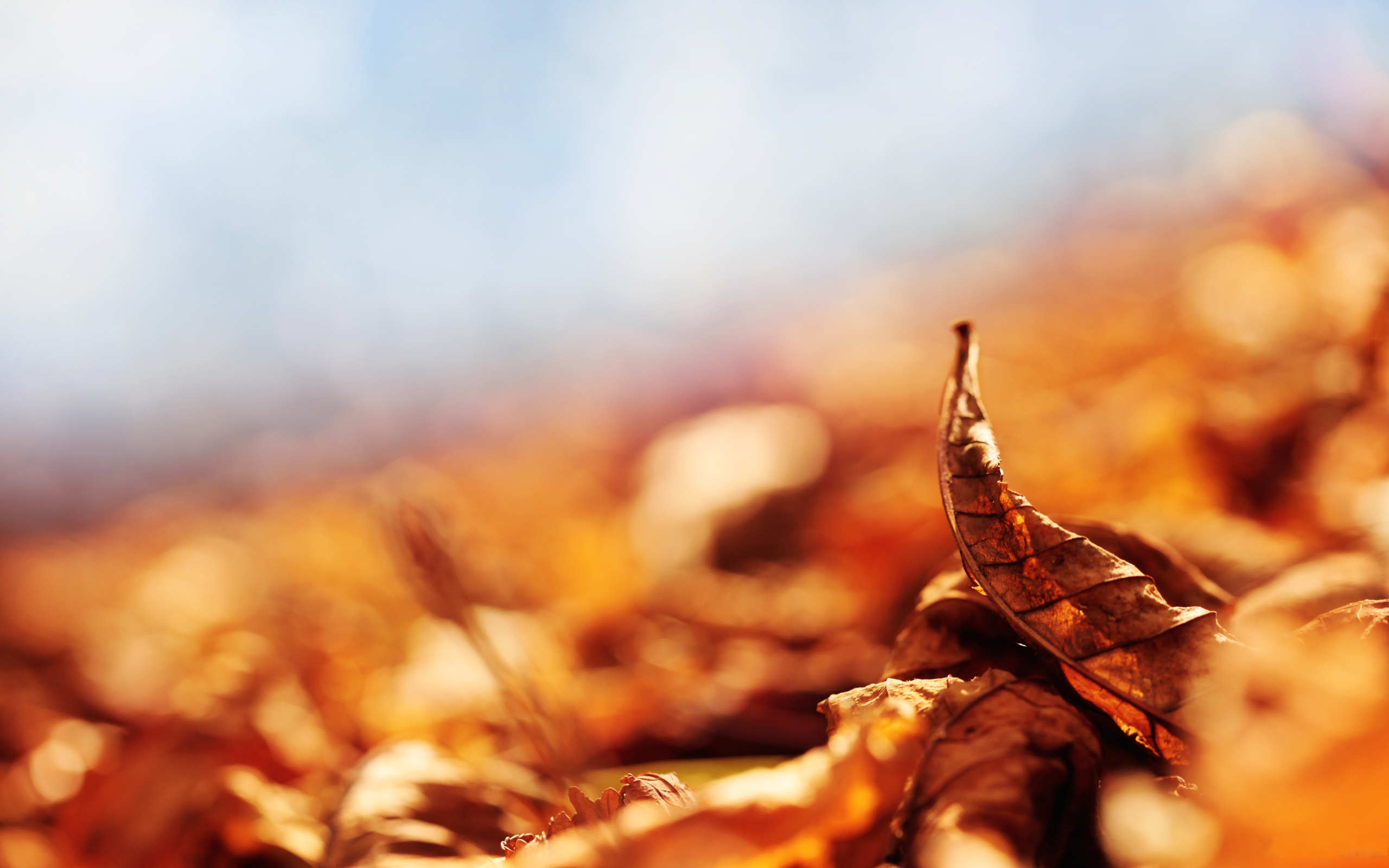 autumn leaf brown