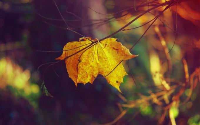 autumn leaf cool