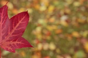 autumn leaf cute