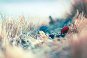 autumn leaf hd picture