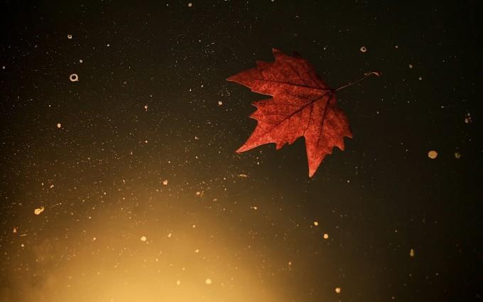 autumn leaf in water