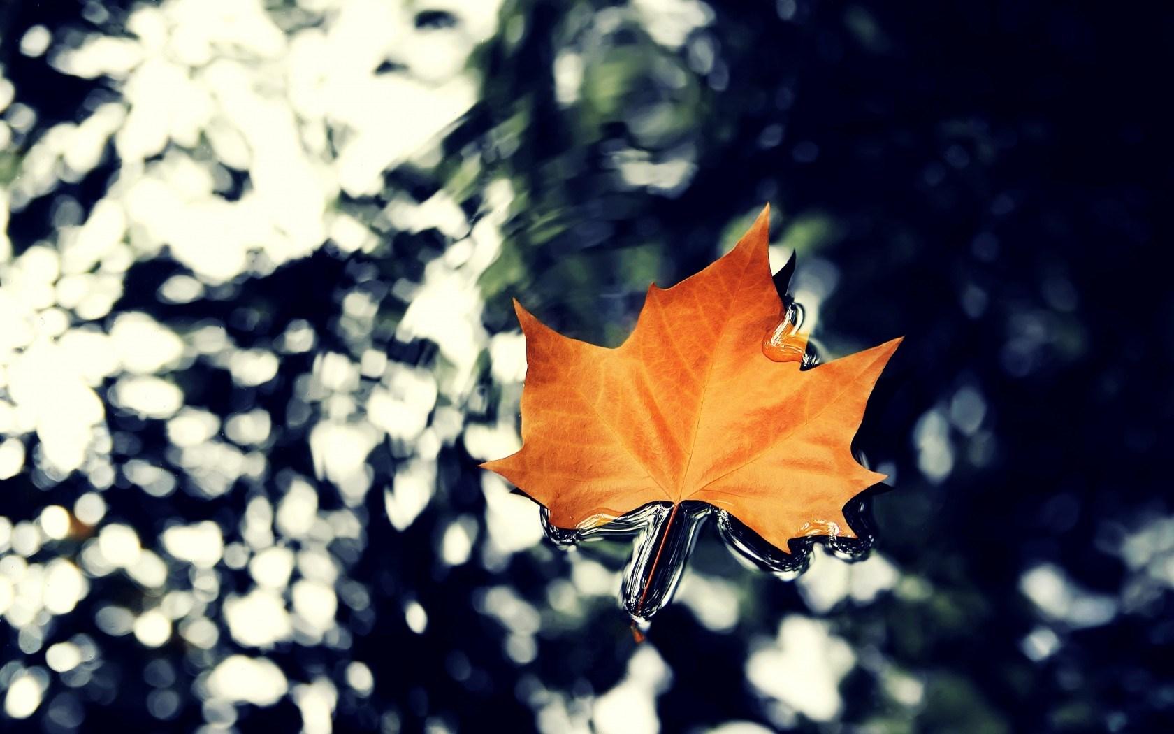 autumn leaf nature stunning