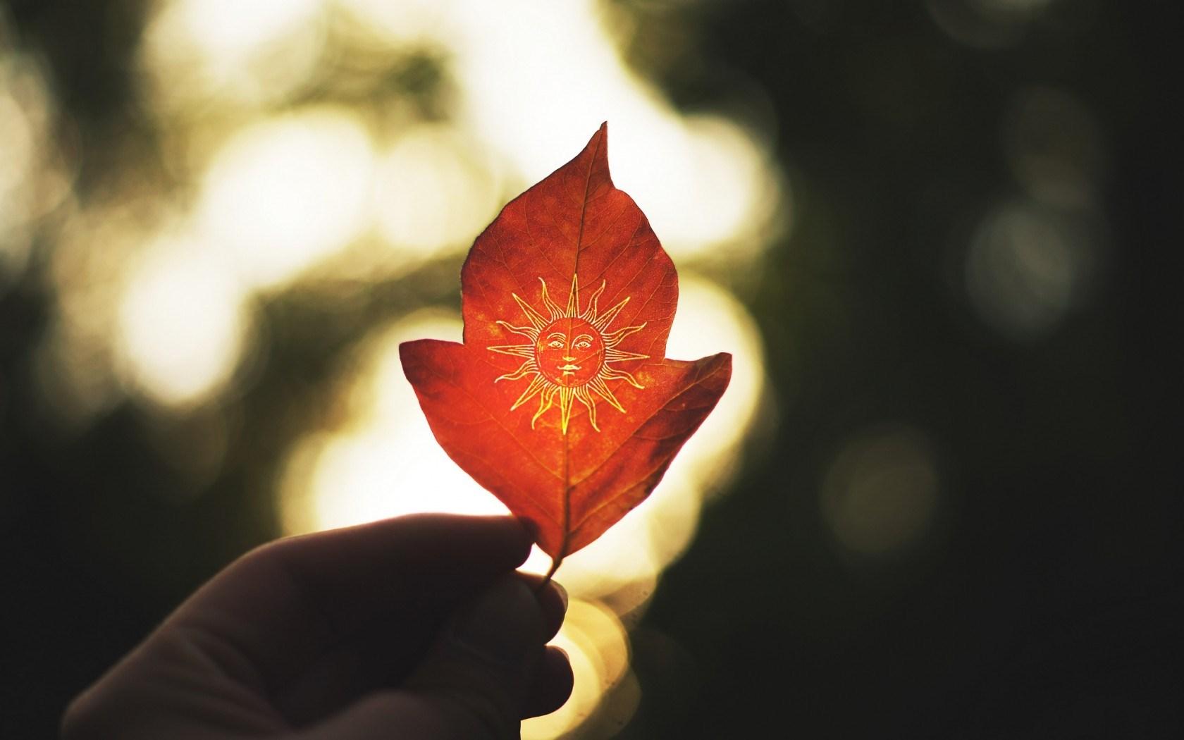 autumn leaf wallpaper background