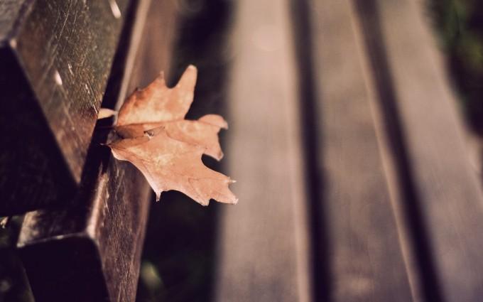 autumn leaf wallpaper hd download