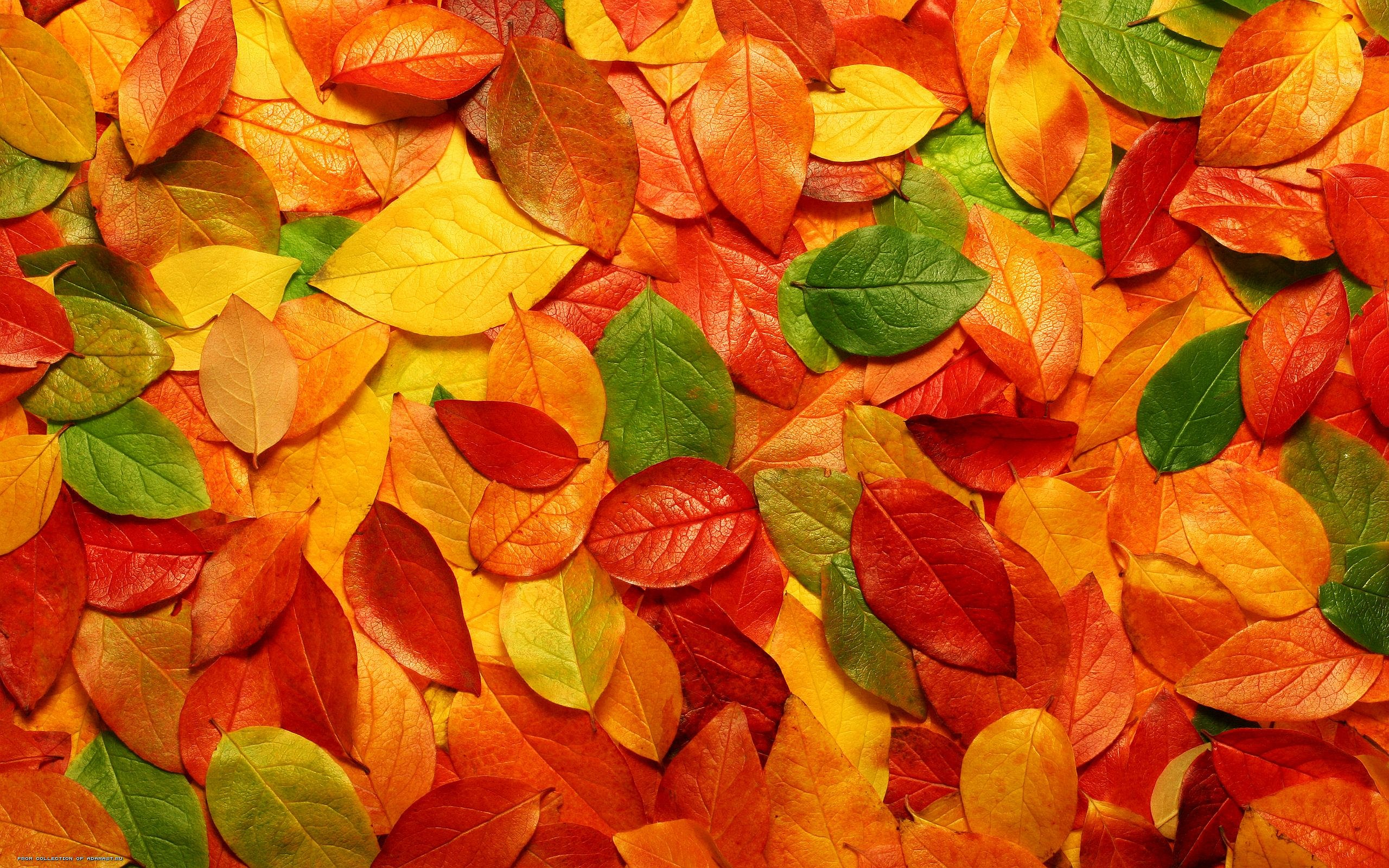 autumn leaves download