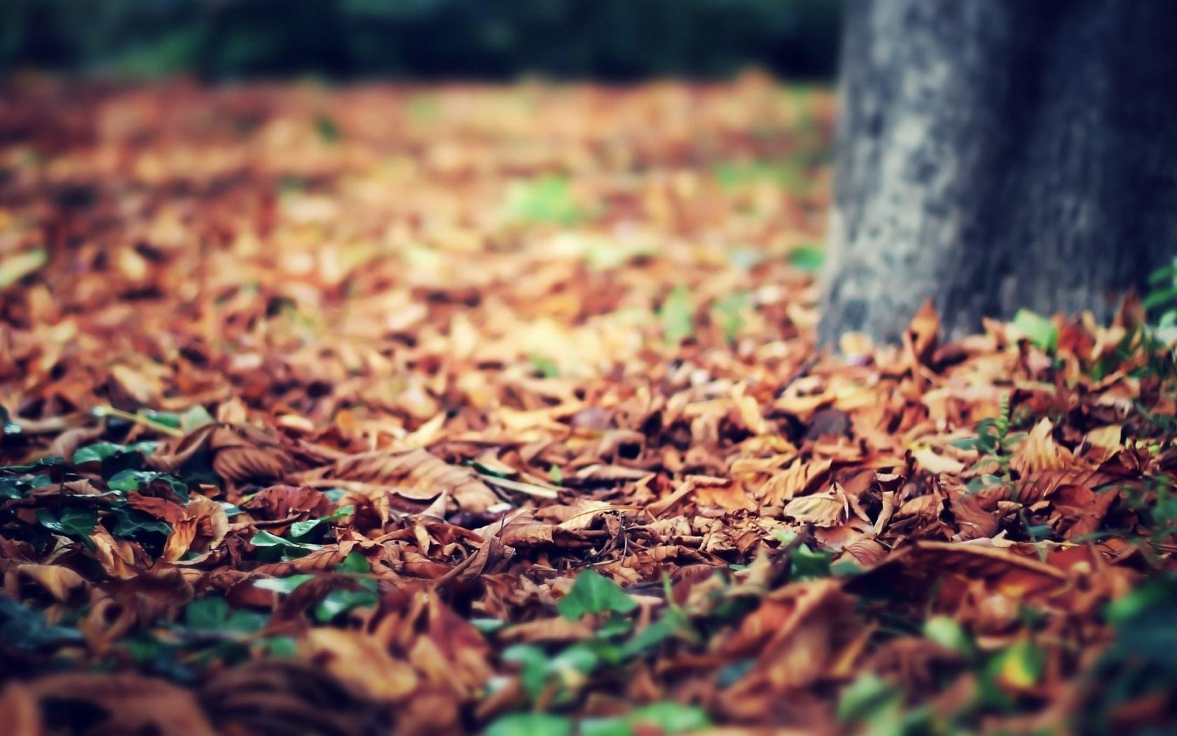 autumn leaves free