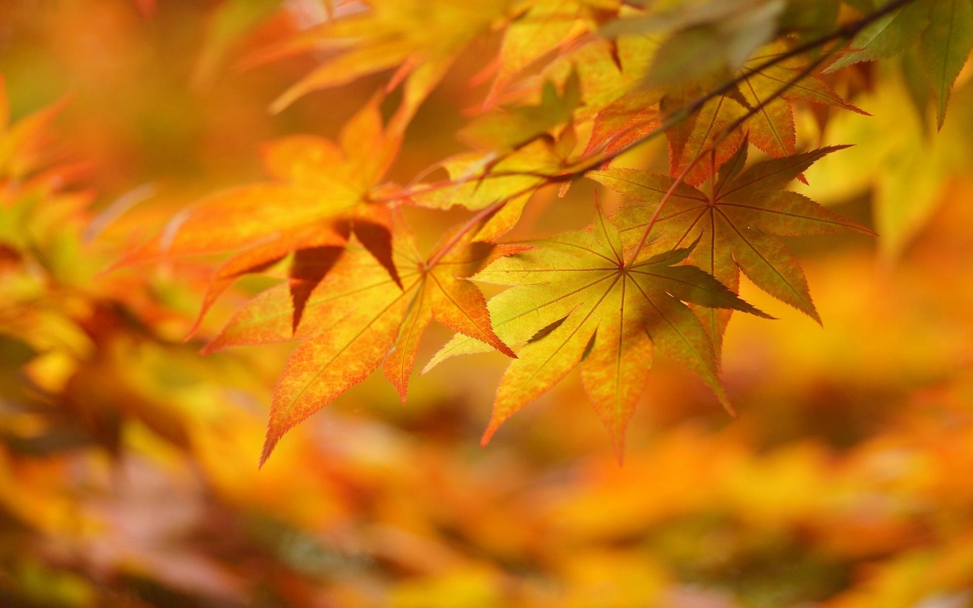 autumn leaves hd - Wal...