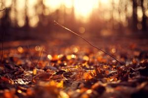 autumn leaves jungle