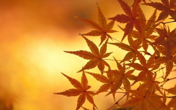 autumn leaves macro