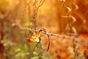 autumn leaves macro hd