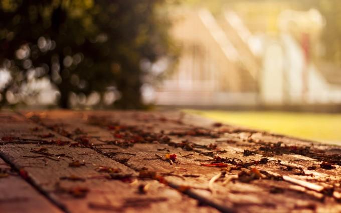 autumn leaves nature macro