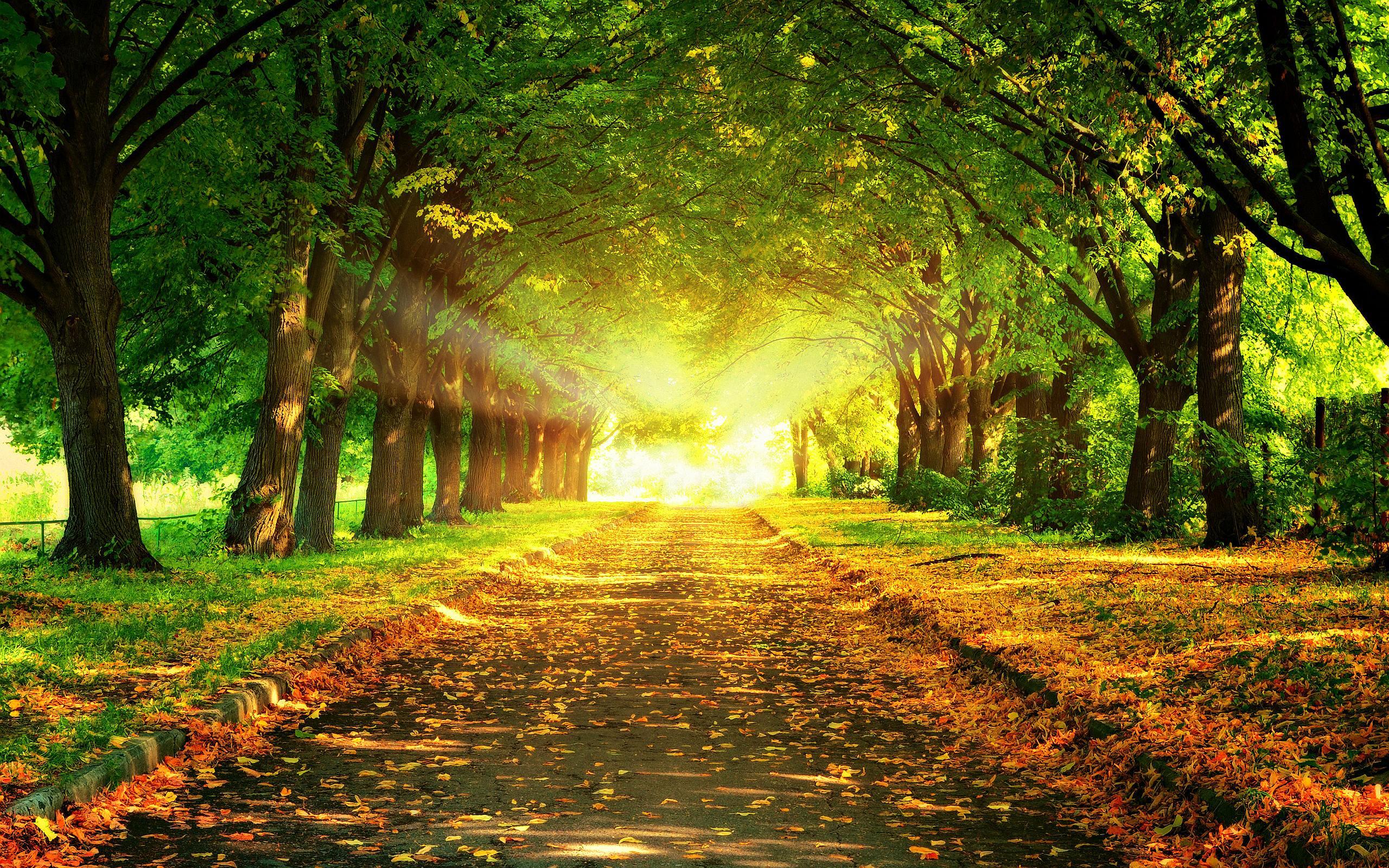autumn leaves park