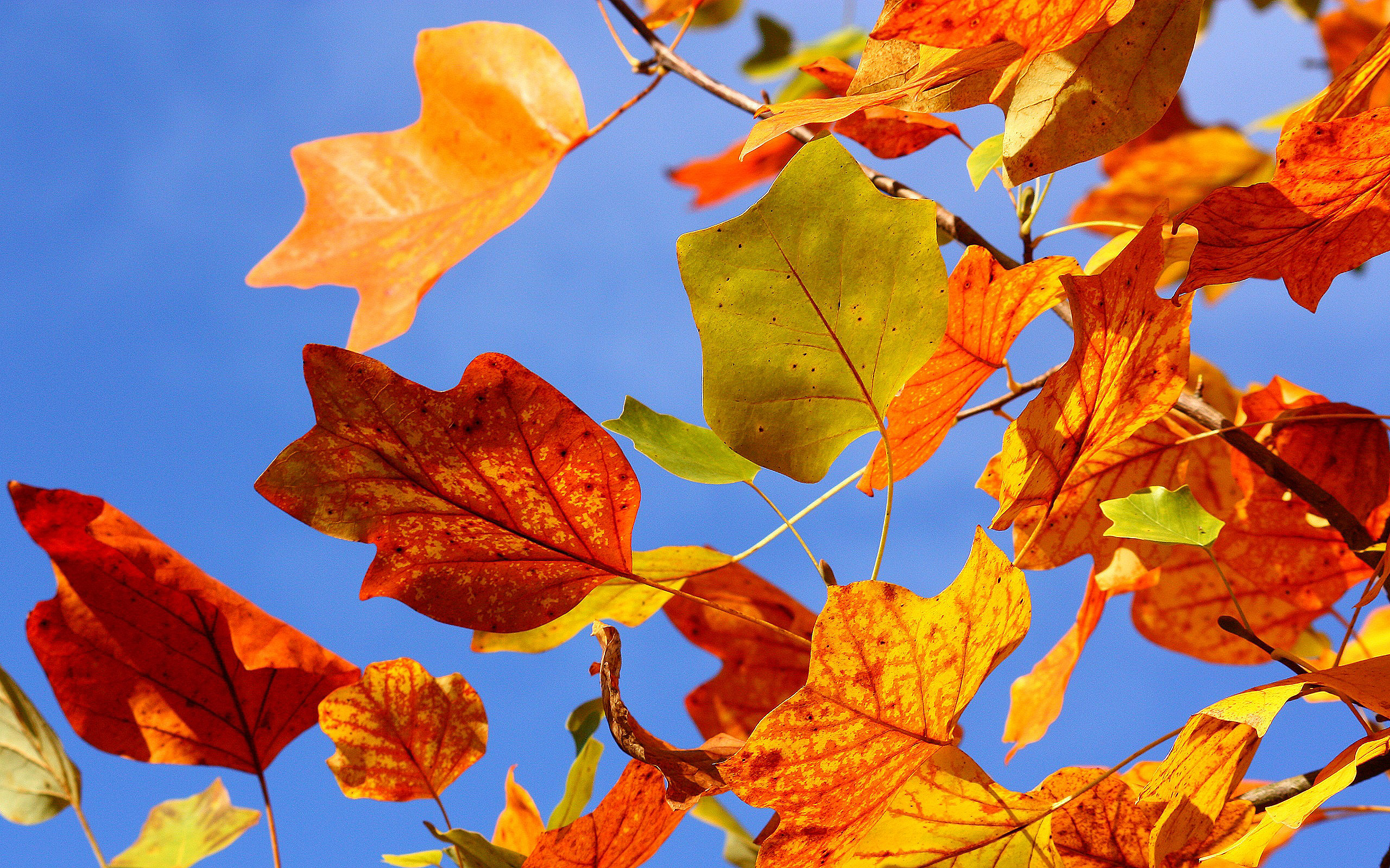 Fall Leaves Photography Wallpaper autumn leaves photo - ...