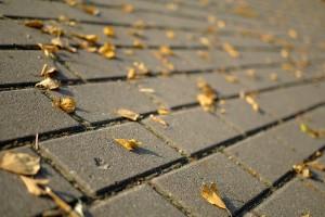 autumn leaves road