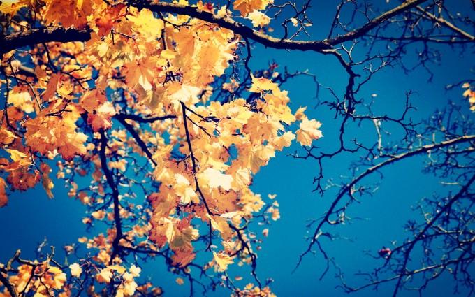 autumn nature leaves