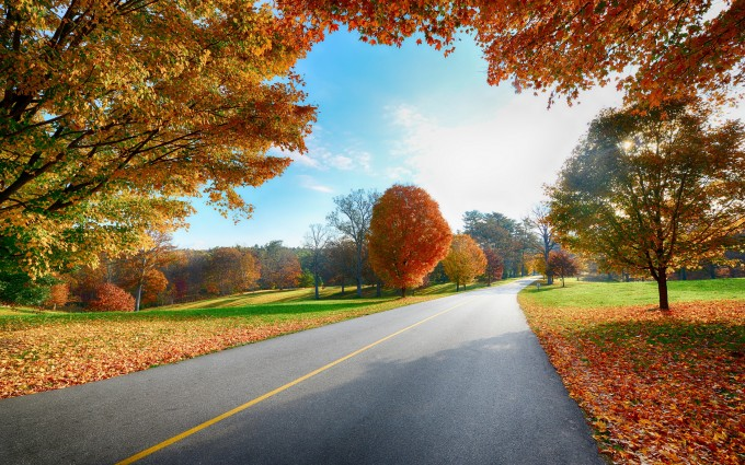 autumn nature road