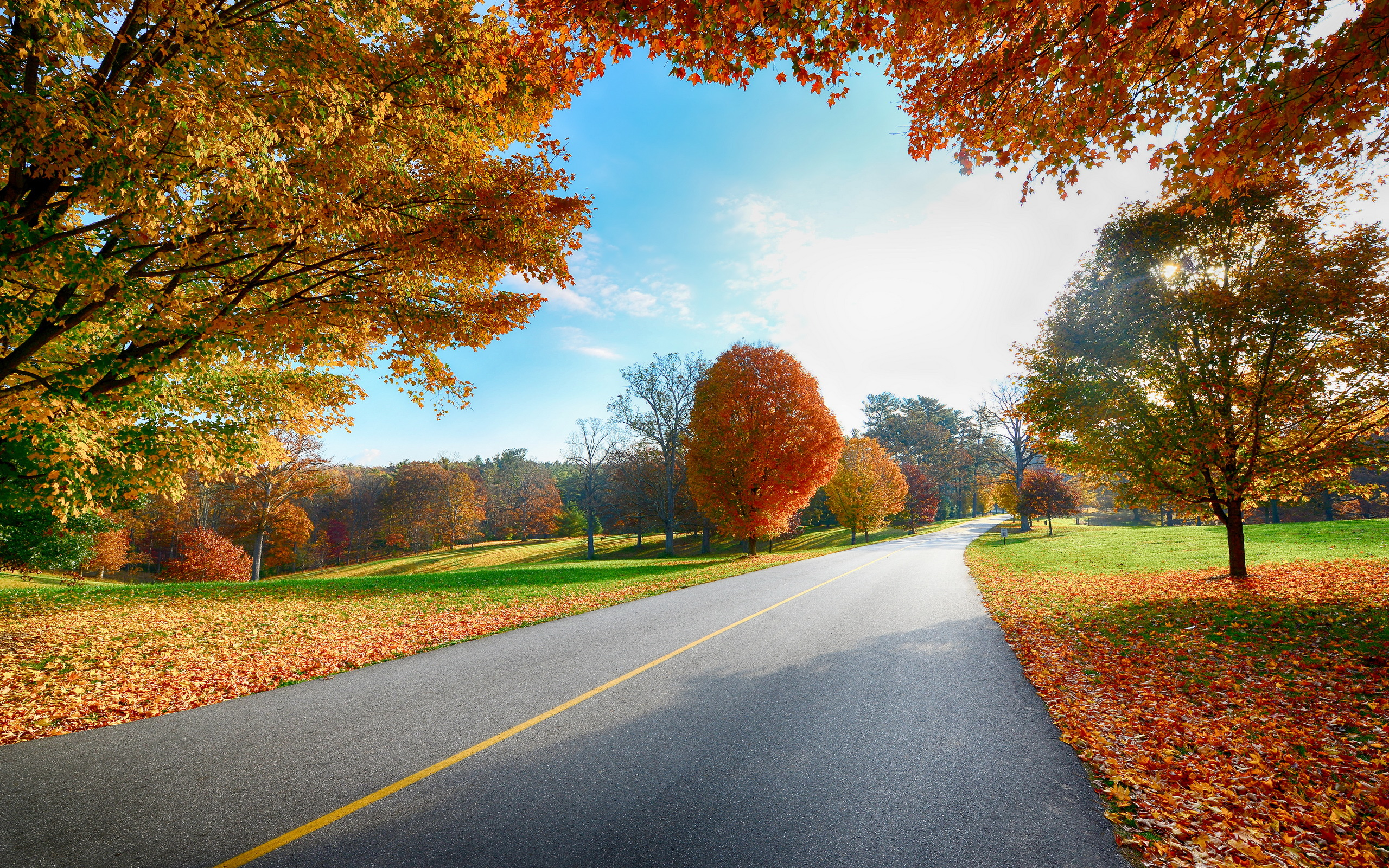 autumn nature road
