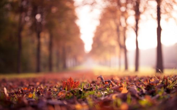 autumn nature tree leaves