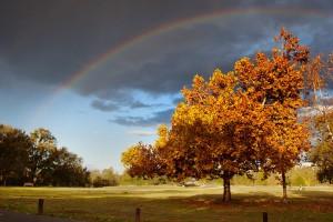 autumn rainbow wallpaper