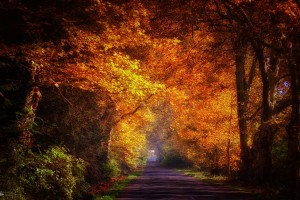 autumn road morning