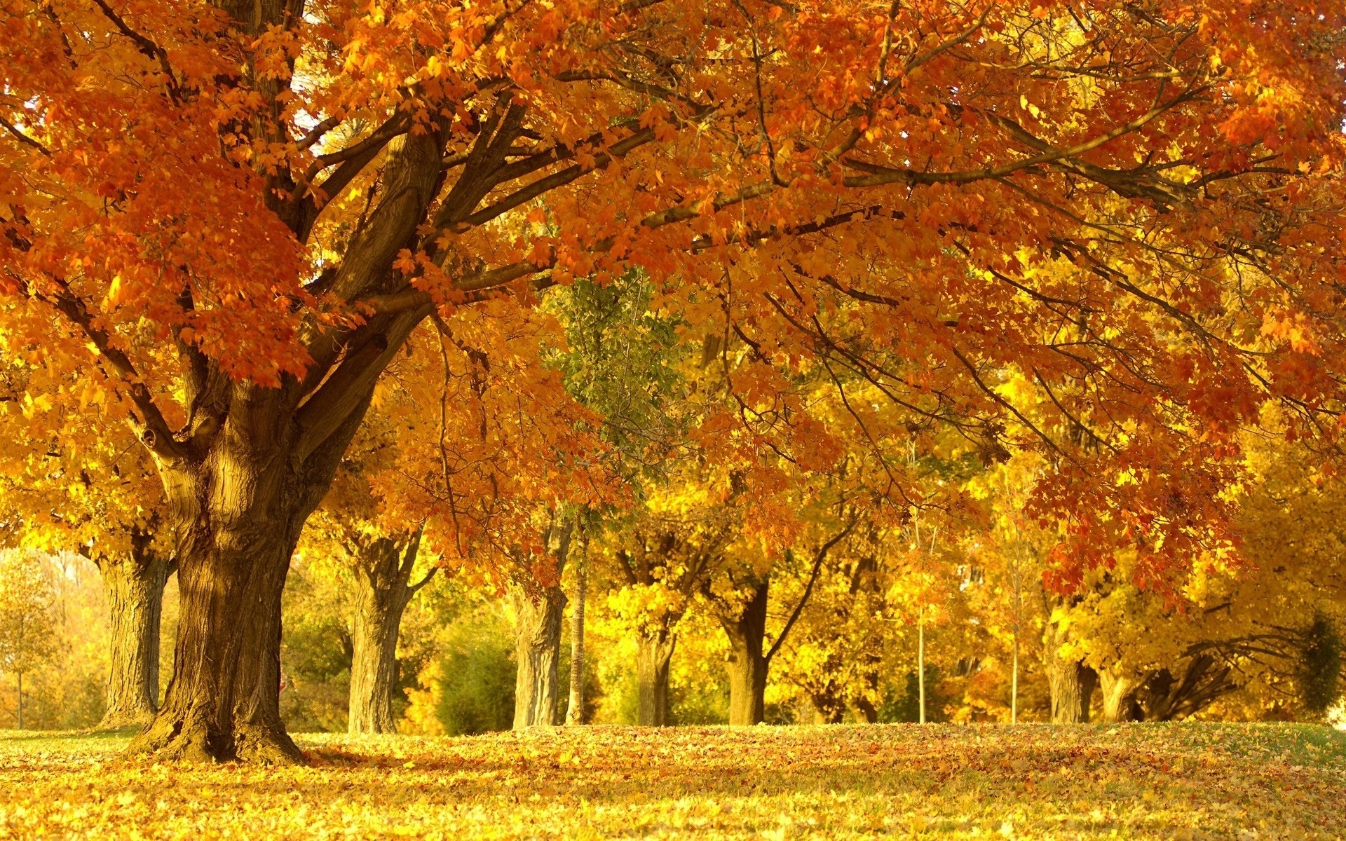 autumn scenery backgrounds