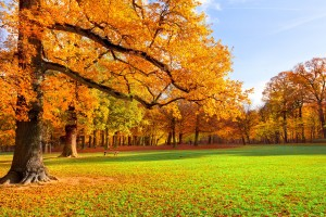 autumn scenery hd