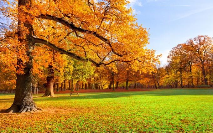 autumn scenery hd