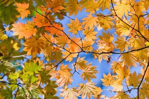autumn sky leaves