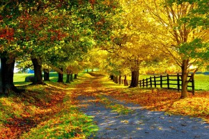autumn stunning pictures