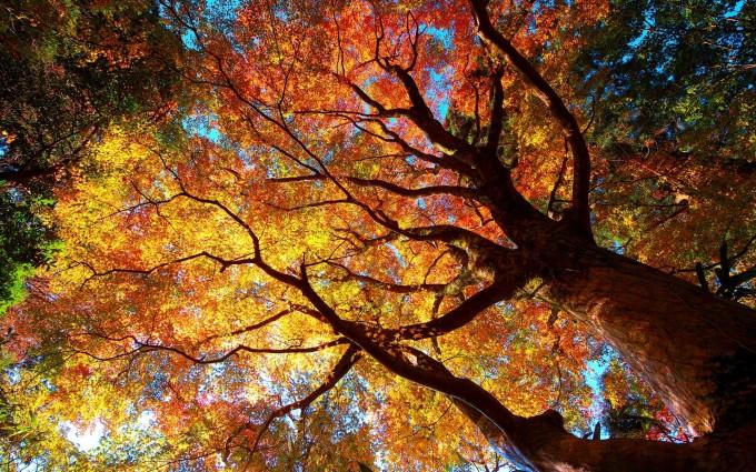autumn tree forest