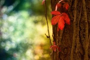 autumn tree jungle