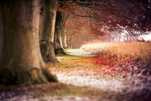 autumn trees hd