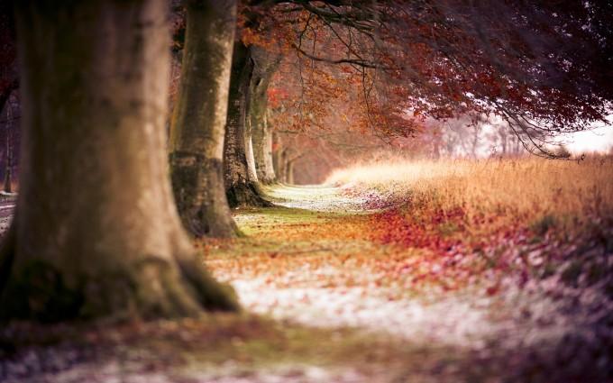 autumn trees hd