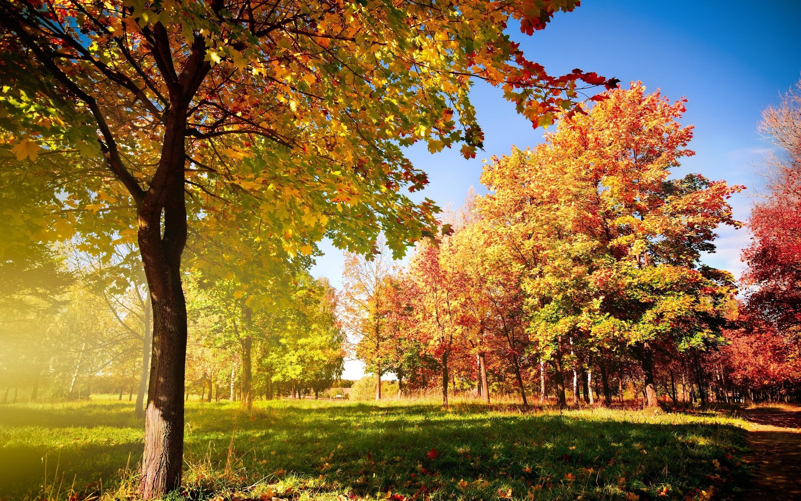 autumn trees hd wallpaper